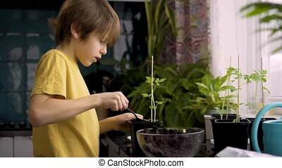 Little boy planting seedlings at home. An independent child is busy with a hobby with potted plants. Lifetime concept.