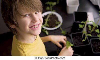 Little boy planting seedlings at home. An independent child is busy with a hobby with potted plants. Happy child replanting tomato. Lifetime concept. Top view