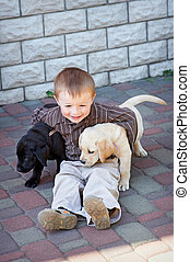little boy playing outdoor with a two Labrador puppies