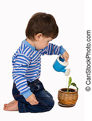 Little boy pours a plant