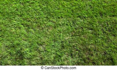 Little boy rolls by green grass plot