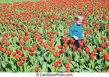Little boy running on tulips fields