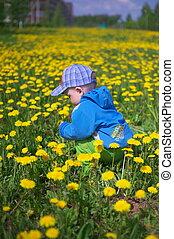 Little boy through dandelions