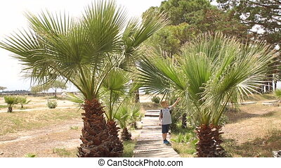 Little boy walking on a wooden bridge among the palm trees on vacation in summer