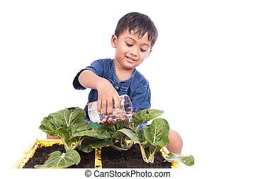 little boy watering vegetable