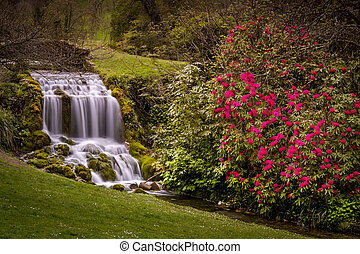 Dorset village of Little Bredy with waterfall and Rhododendrons