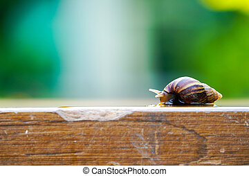 little brown snail is slowly moving on the wooden plate with blurry green background.