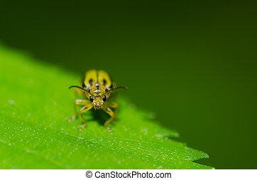 Little bug on a leaf