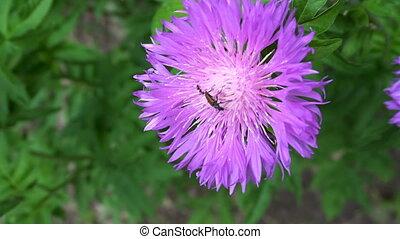 little bug sitting on a purple flower.