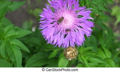 little bug sitting on a purple flower