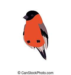 Little Bullfinch Bird, Cute Birdie Home Pet Vector ...