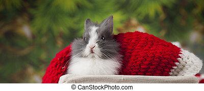 Little bunny, Funny rabbit on Christmas background