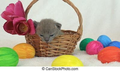 little burmese kitten in a wicker basket among easter eggs