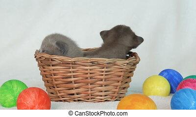 little burmese kittens in a wicker basket among easter eggs