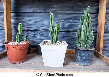 Little cactus plant in the flower pot