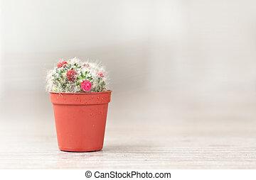 Little Cactus plant