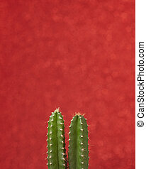 Little Cactus plant on a red color wall