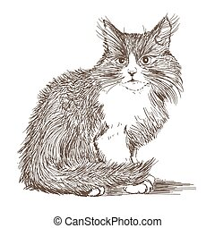 little cat drawing on white