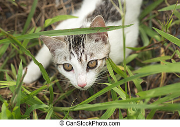 cat hide in the grass