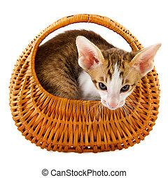little cat in basket
