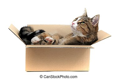 little cat in paperbox