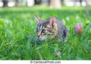 Little Cat in the green grass