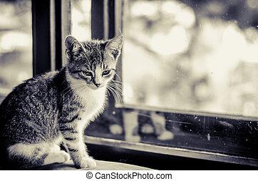 little cat in window