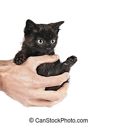 little cat on hands
