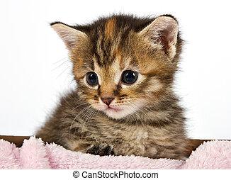 Little cat sitting in a basket