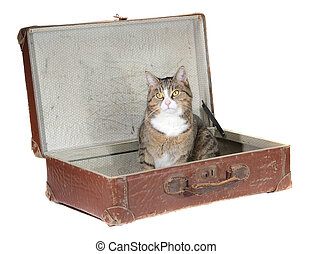 little cat sitting in old suitcase