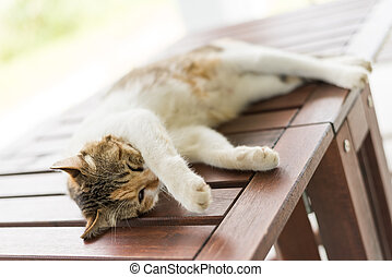 cat sleeping and lying