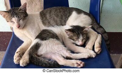 Little Cat Sleeping With Mother