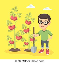 Little caucasian farmer boy cultivating tomatoes.