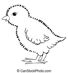 little chick. vector illustration Drawing by hand.