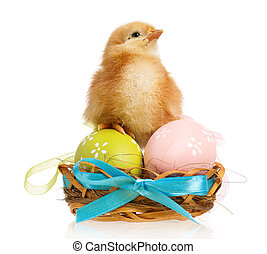Little chicken in nest with Easter eggs