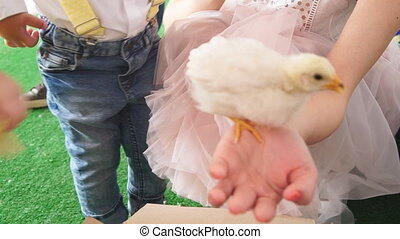 Little chicken on a woman's hand