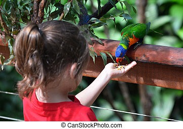 Little child feeds a Rainbow Lorikeet