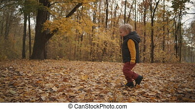 little child is walking in forest at autumn day, enjoying crunch of leaves on ground and having fun, happy kid