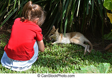 Little child looks at a baby wallaby cub in Queensland, Australia