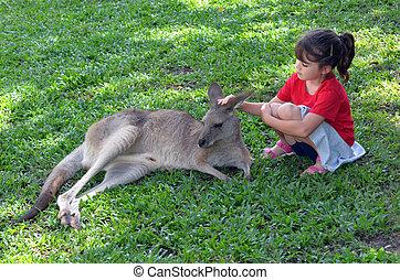 Little child petting grey kangaroo in Queensland, Australia