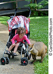 Little child petting wallaby in Queensland, Australia