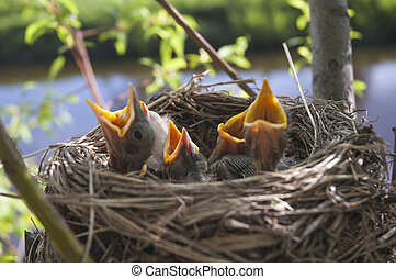 Little children Birds 4