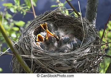 Little children Birds 7 - sleeping bird in the nest in the...