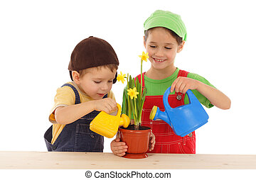 Little children watering for potted narcissus, isolated on white