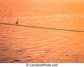 Little Chinese egret bird perched on a rope over the sea, in sunset light