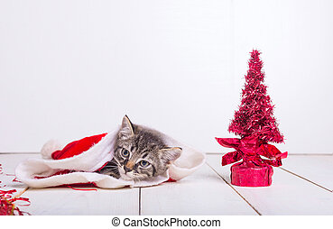 Little christmas cat