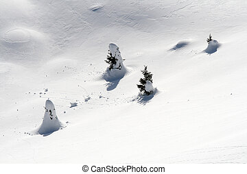 Little christmas trees isolated under snow