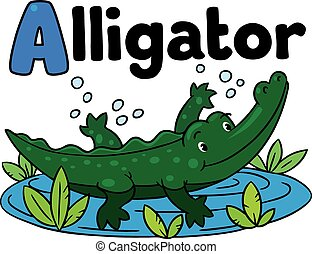 Little crocodile or alligator,