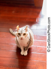 little cute cat look at you on the wooden ground in the room