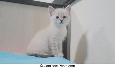 little cute cute white kitten sitting on the bed in the...